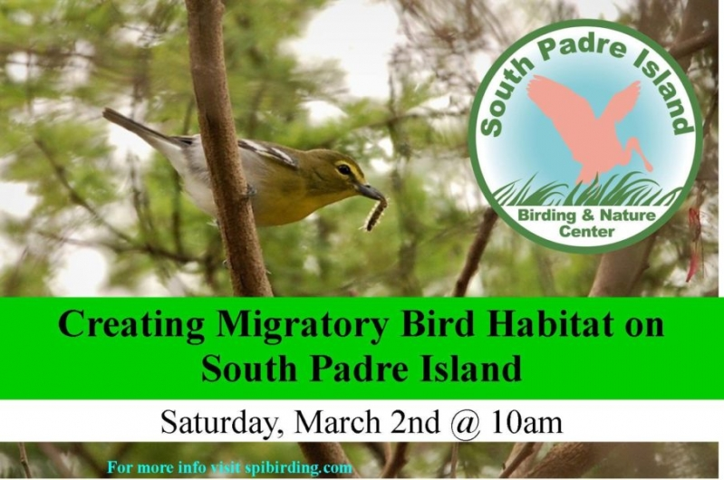 Creating Backyard Bird Habitat On The Coast